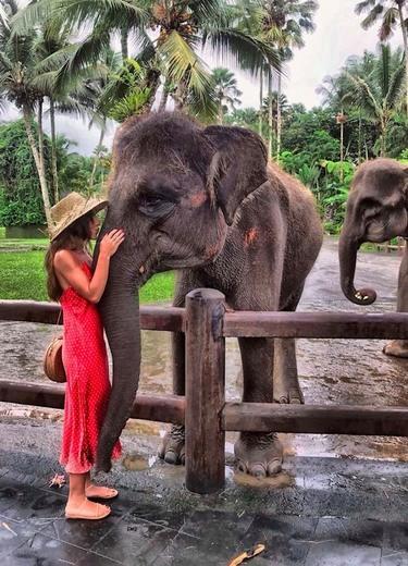 Elephant Park Lodge