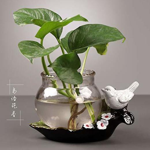 Deciracion Plantas Acuáticas En Vidrio Transparente. Pez Dorado De Green Luo Aquatic