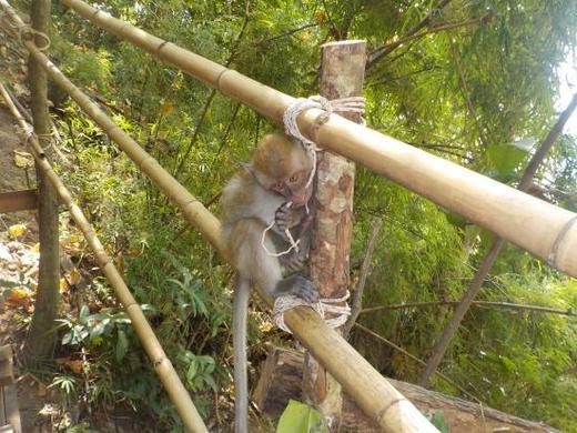 Monkey Trail @ Centara Grand, Ao Nang