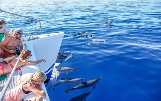 Catamarã - observação de golfinhos e de baleias