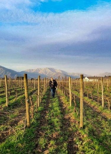 Viu Manent vineyard
