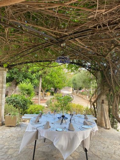 Placeta Garden