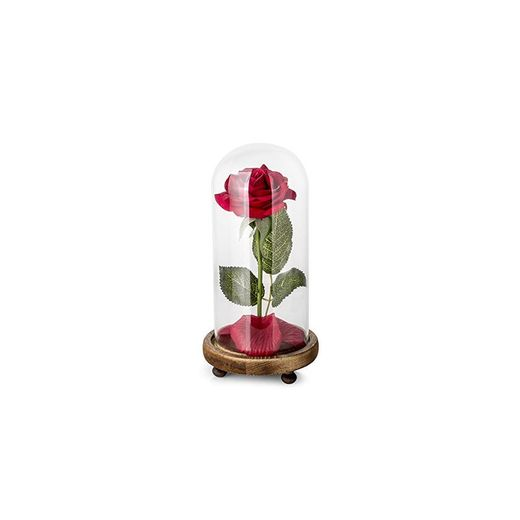 """La Bella y la Bestia"" Rose Kit"