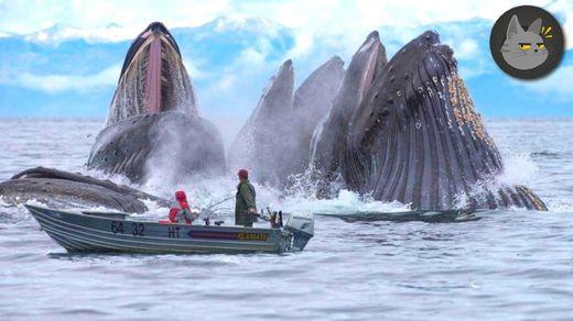10 Animales Gigantescos Que Viven En Las Profundidades - YouTube