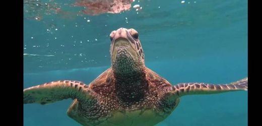 Linda tortuguita que nadas por el mar...