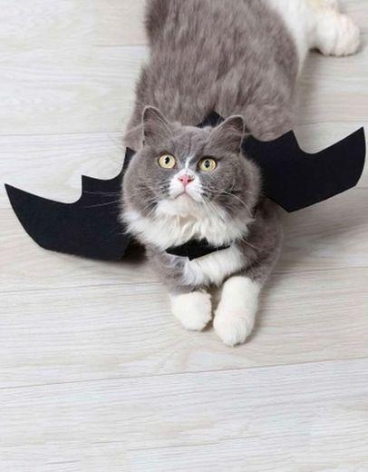 Morcego pet