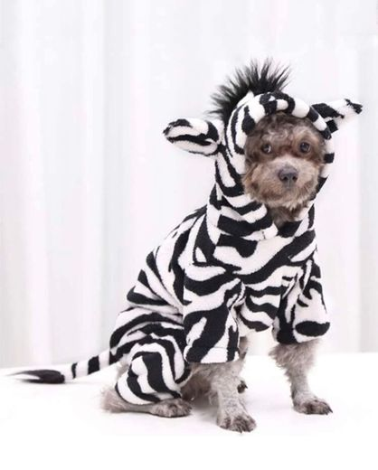 Zebra dog