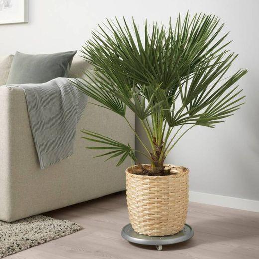 Vaso de bambu